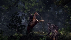 9 The Witcher 3 Wild Hunt Horse Ride